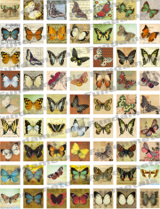 Butterfly Images Digital Collage Sheets